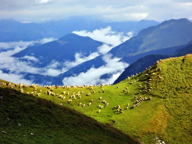 As I reached the summit of the Col du Bonhomme, there was finally sun and sheep.