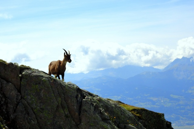 Maybe I really am a mountain goat?